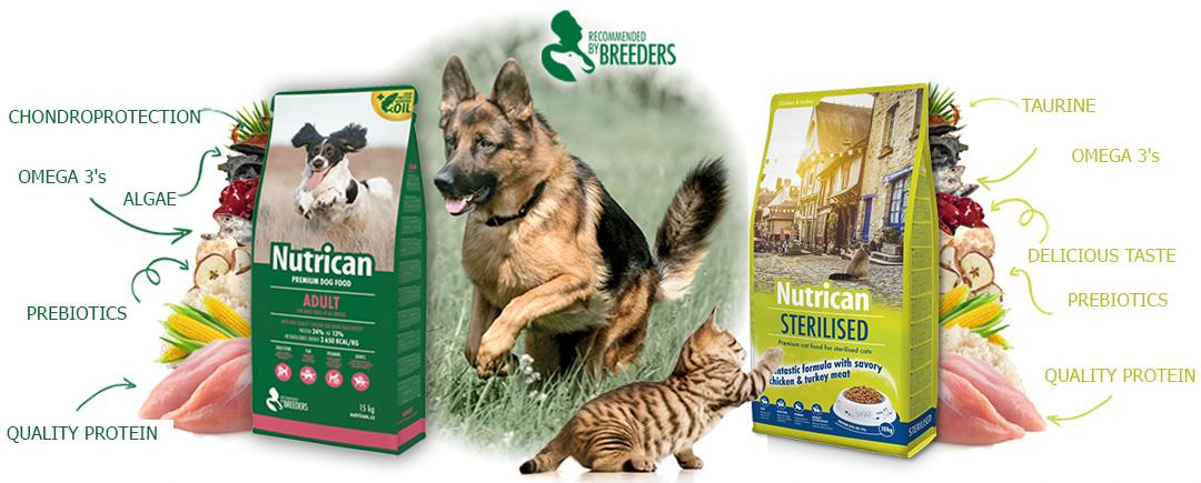 Výživa pro psi a kočky